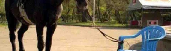The Horse and The Rope – Short Story