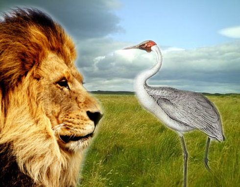 The Lion and the Crane